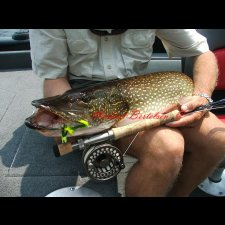 Freshwater Flyfishing Images - photo 2