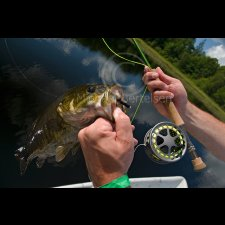 Freshwater Flyfishing Images - photo 4