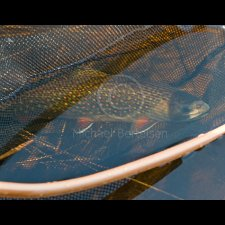 Freshwater Flyfishing Images - photo 10