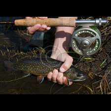 Freshwater Flyfishing Images - photo 0