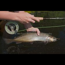 Freshwater Flyfishing Images - photo 11